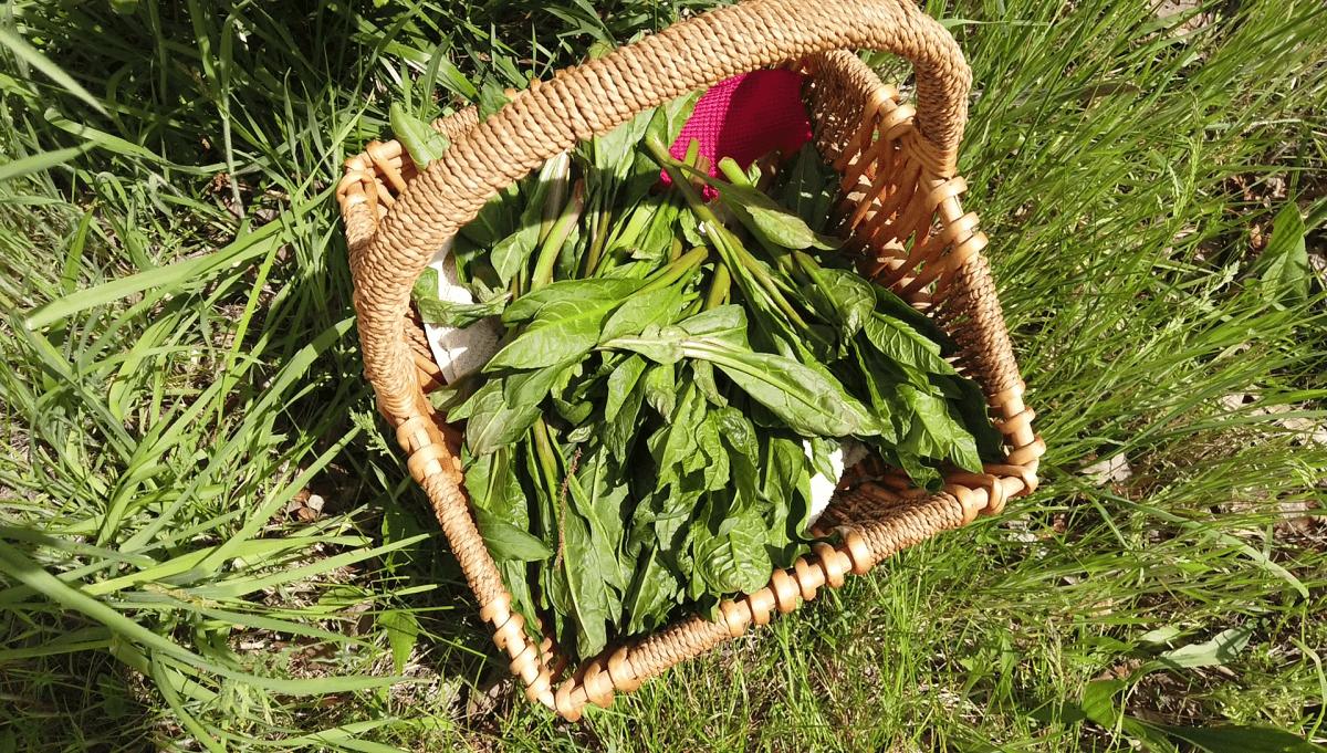 basket-load-of-pokeweed