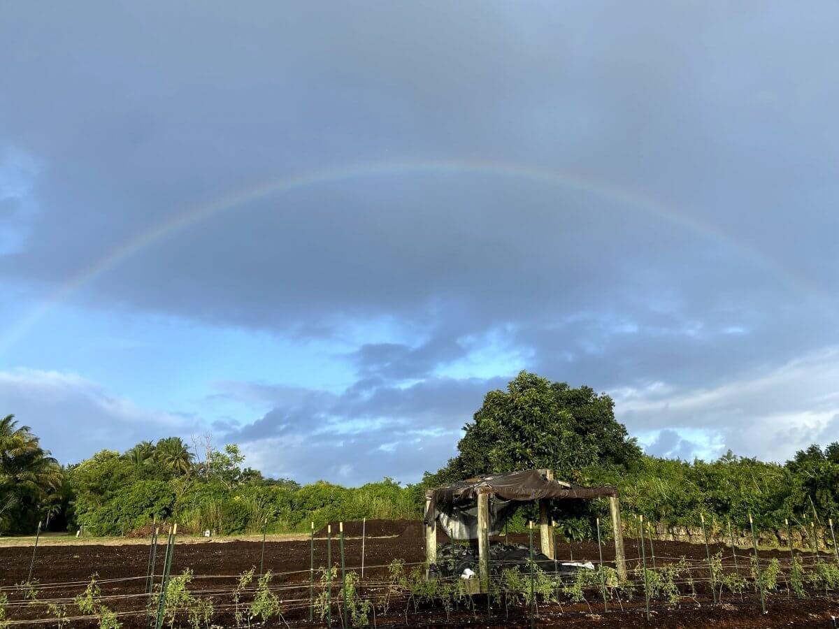 organic farming at paradise faerms