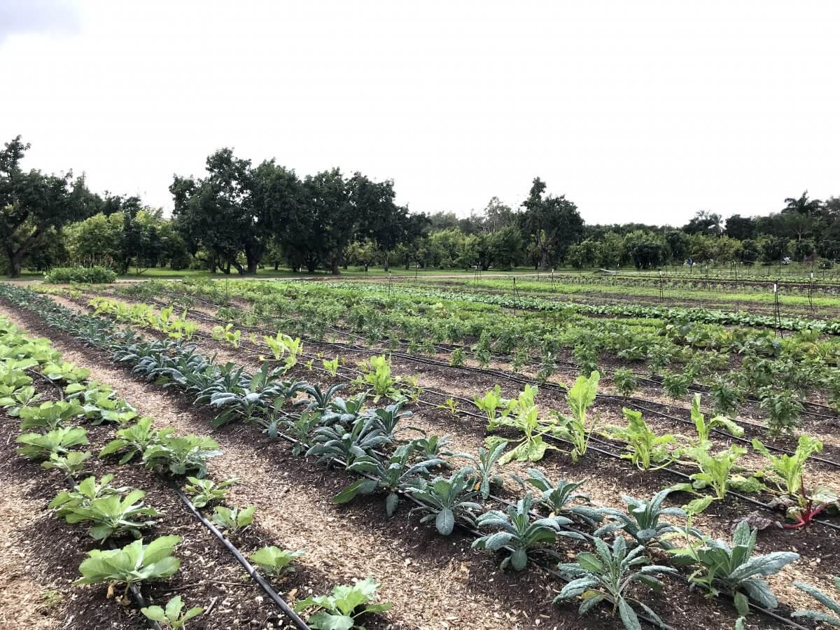 polycropped field
