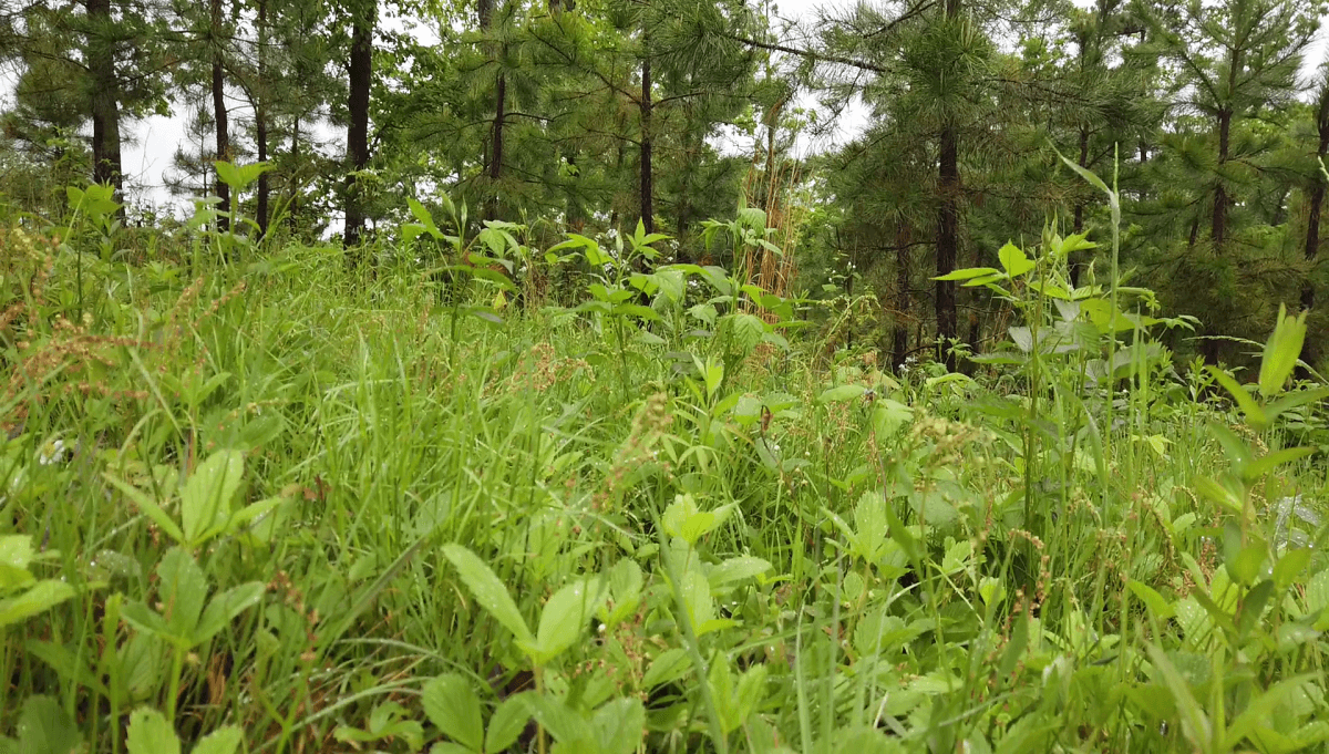 starwberry patch