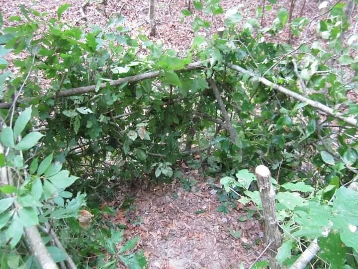 Natural Ground Blind Plans
