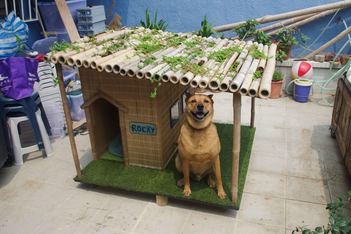 Tropical Resort Dog House Plans