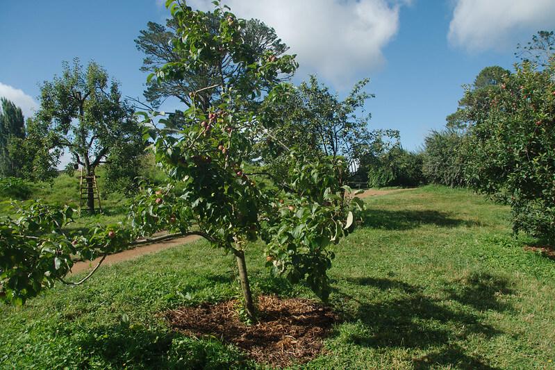 fruit tree orchard