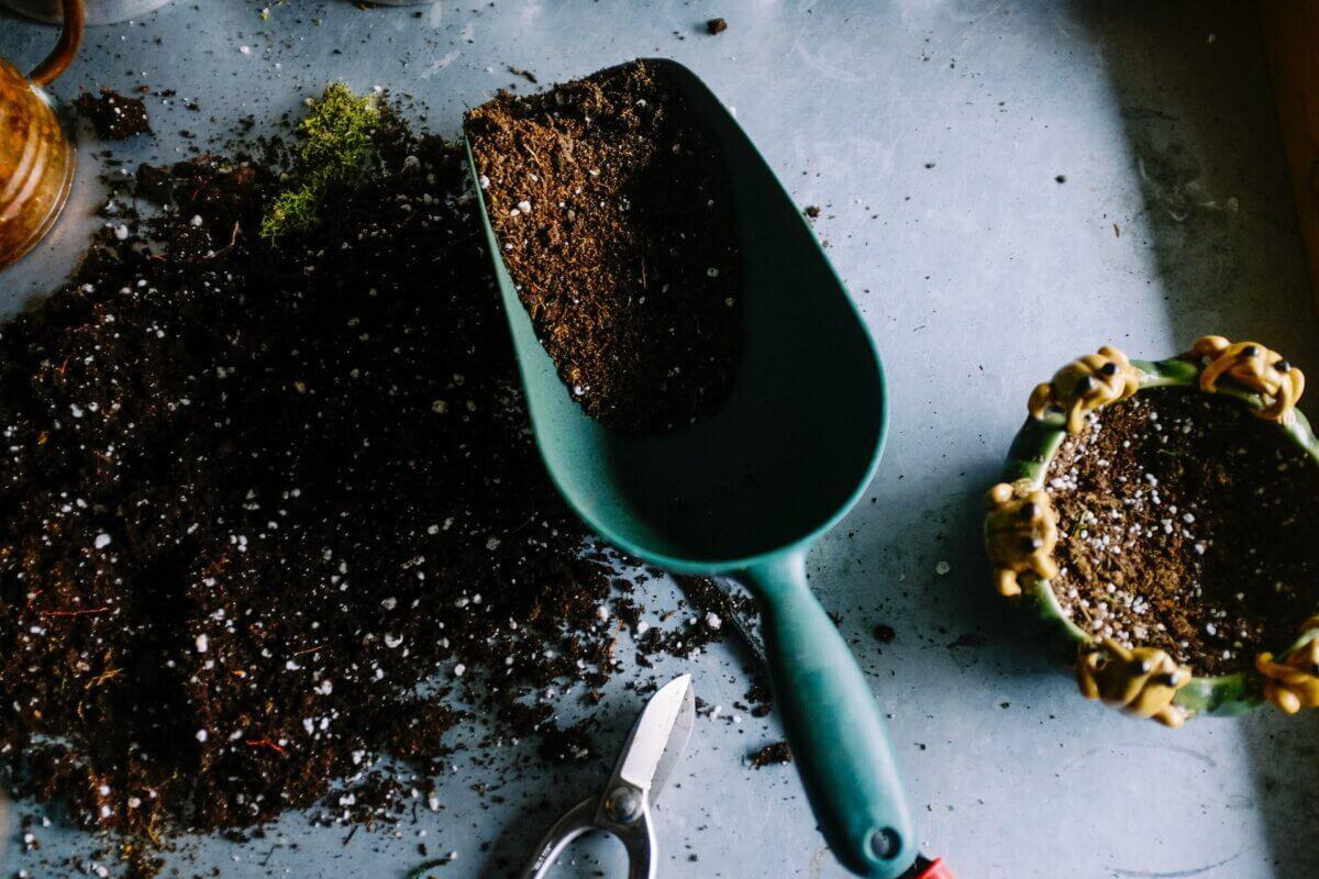 plant shovel
