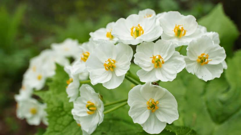 white skeleton flower