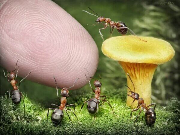 ants and fingertip