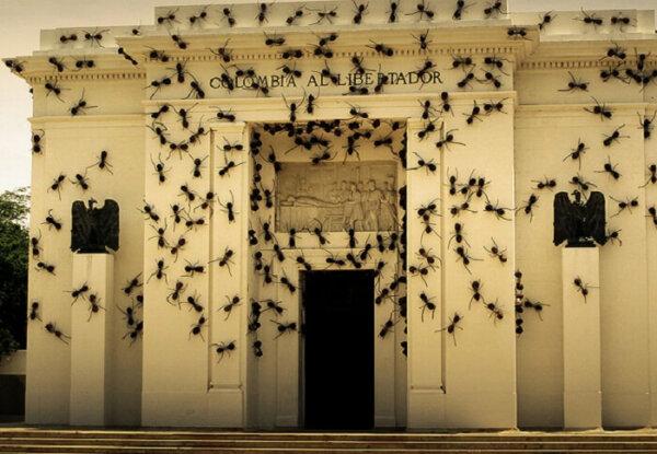 ants columbia