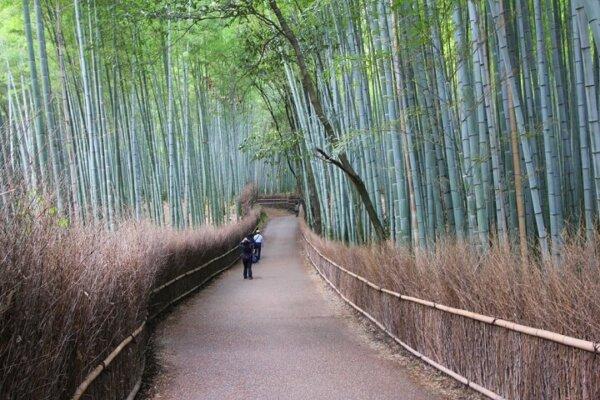 bamboo bark fence