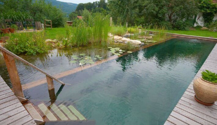 Natural pools or swimming ponds insteading for Koi pond swimming pool