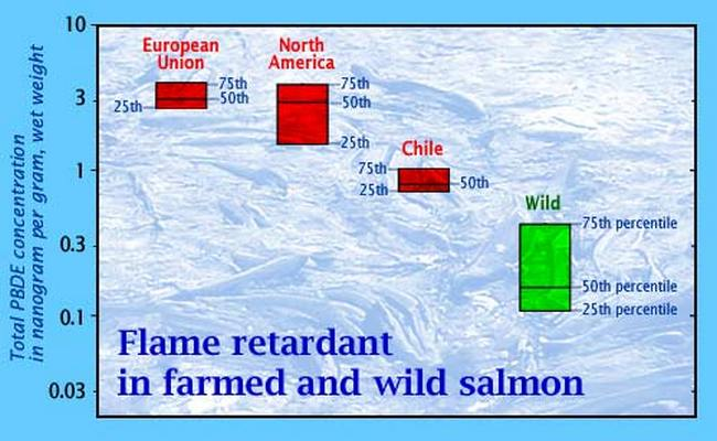 flame retardants in fish