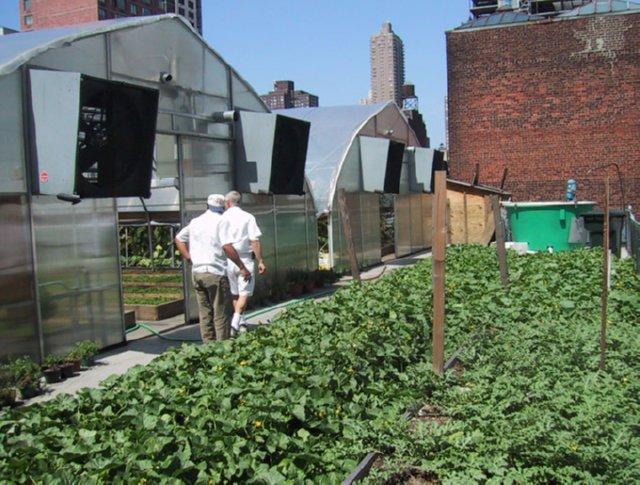 zabar-rooftop-garden-manhattan