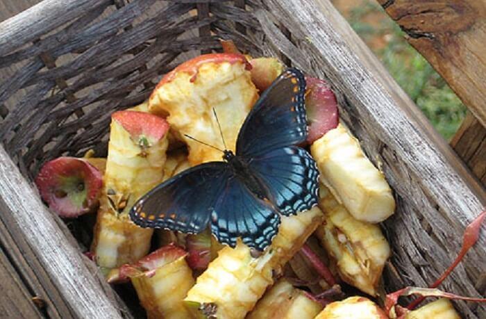buenavistabutterflies-com