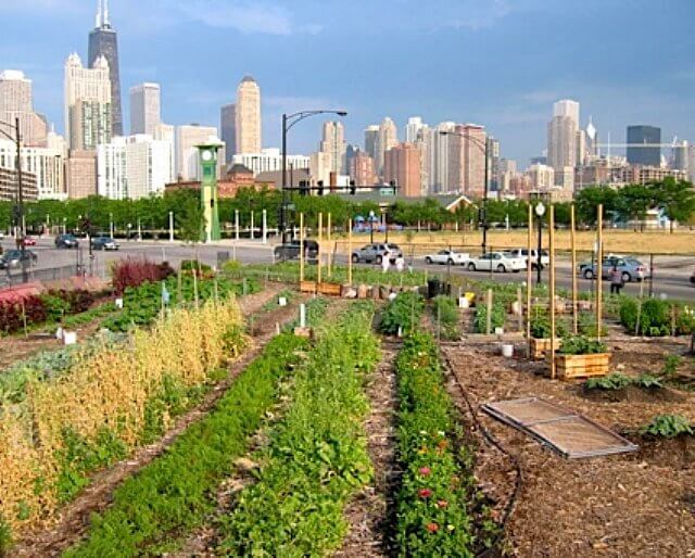 an urban farm with the Chicago skyline in the background