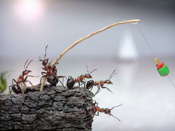 crickets and ants