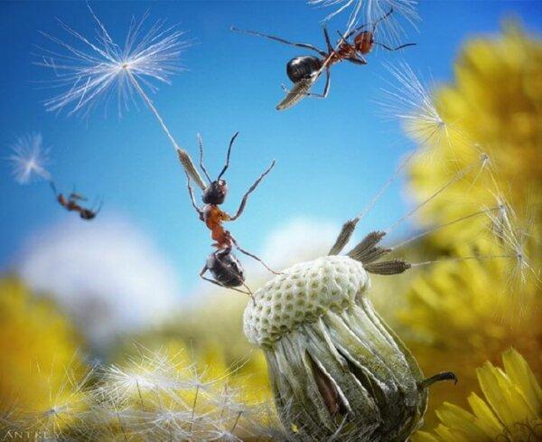 ant photos