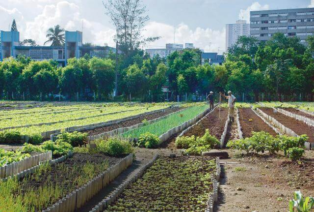 garden near havana cuba