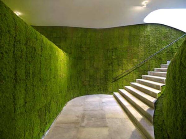 green wall grass