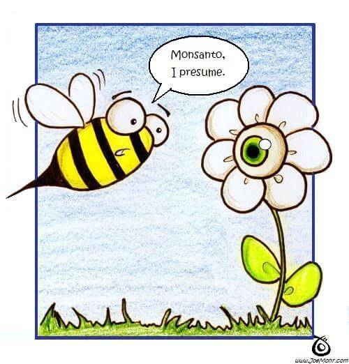 joe-mohr-bee-and-flower-monsanto