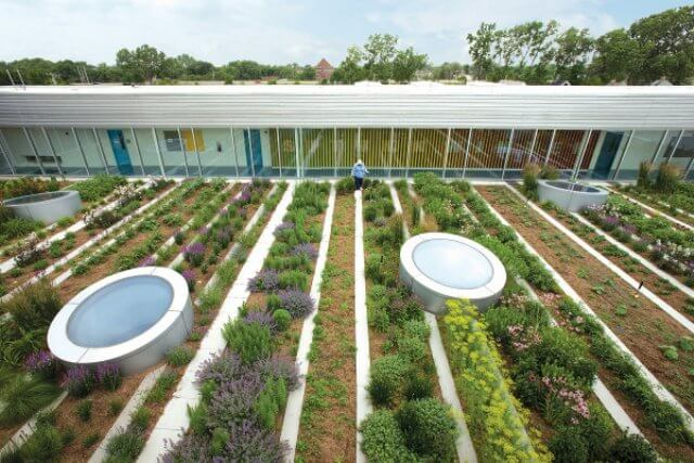 garden on a roof