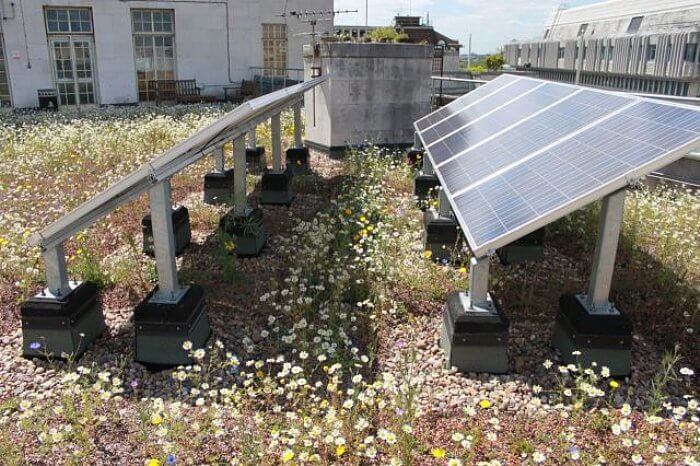institutional green roof