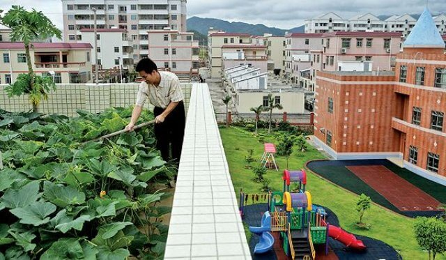 roof-garden-china-owned-by-shell-nanhai
