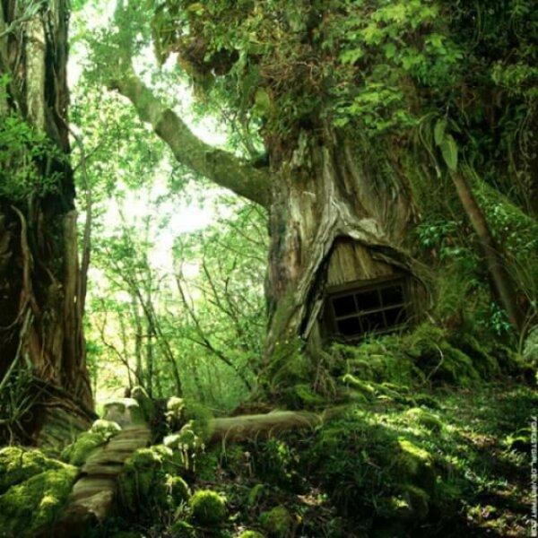 fairie-treehouse