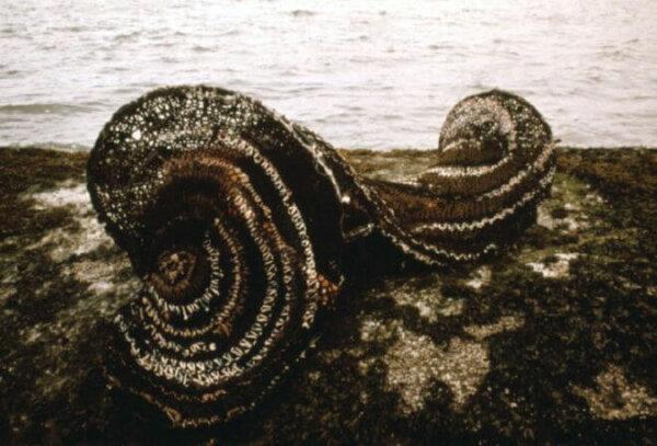 mollusc-3
