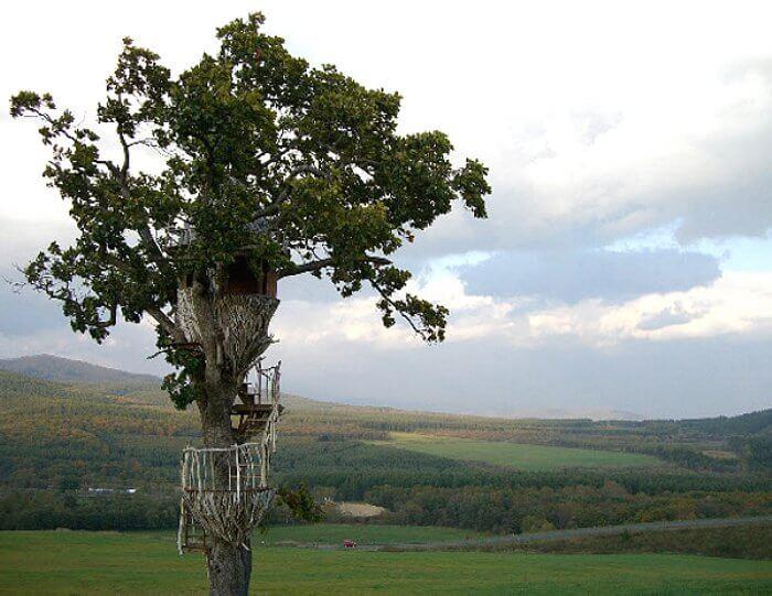 treehouse japan