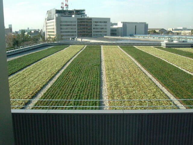 large roof garden