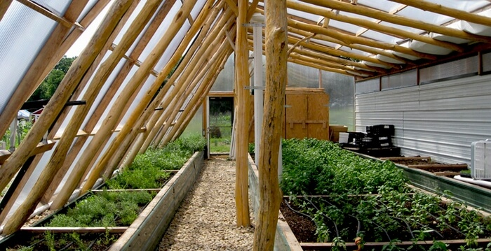 whole tree greenhouse