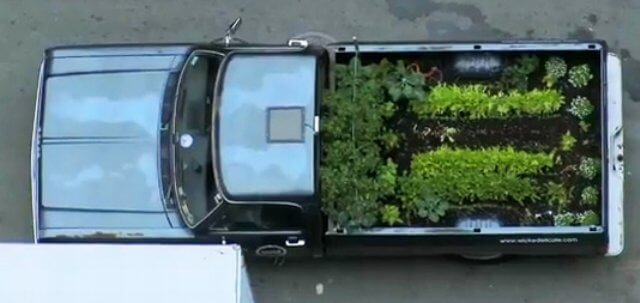 plants growing in the flatbed of a pickup truck