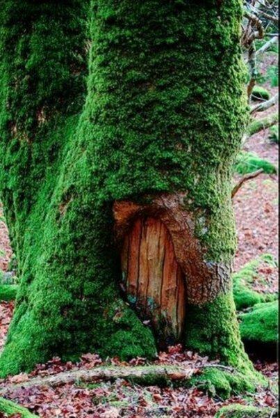 natural-fairy-door