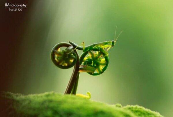 praying mantis bike